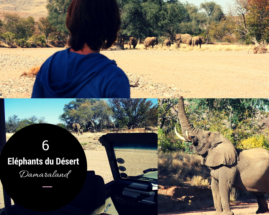 éléphants du désert dans le Damaraland en Namibie