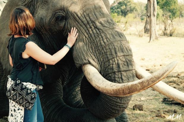 zambie elephant