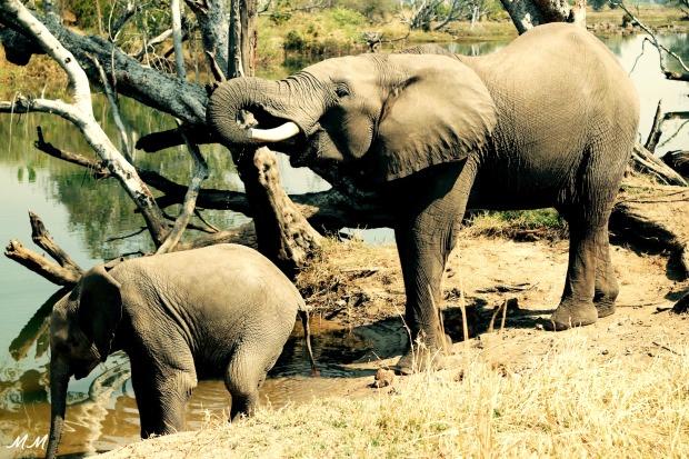 voyage zambie elephant
