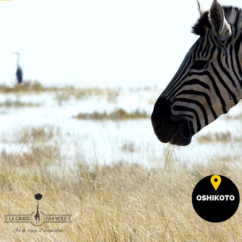 oshikoto région etosha namibie
