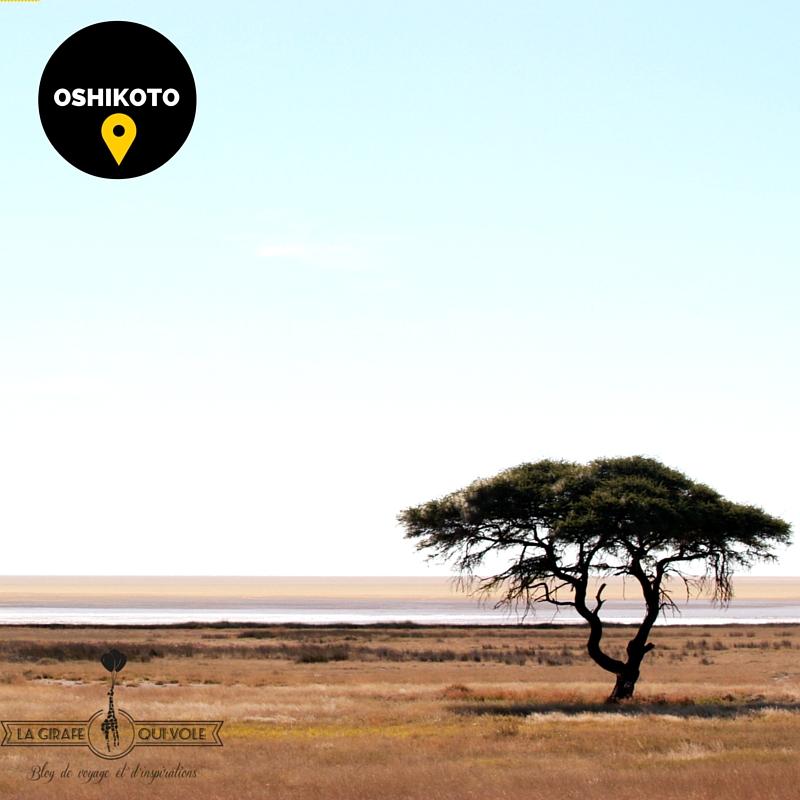 oshikoto etosha région namibie