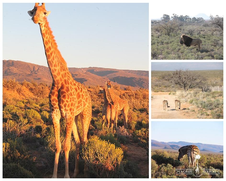 escapade hors du cap en Afrique du Sud