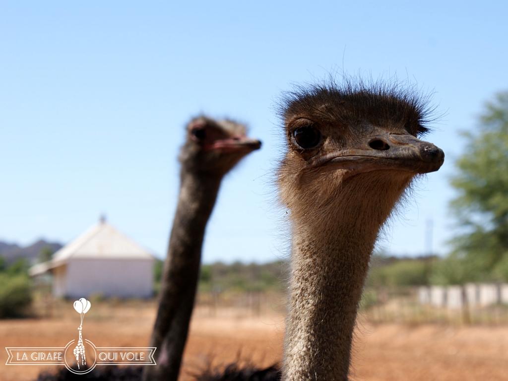 oudtshoorn route des jardins afrique du sud