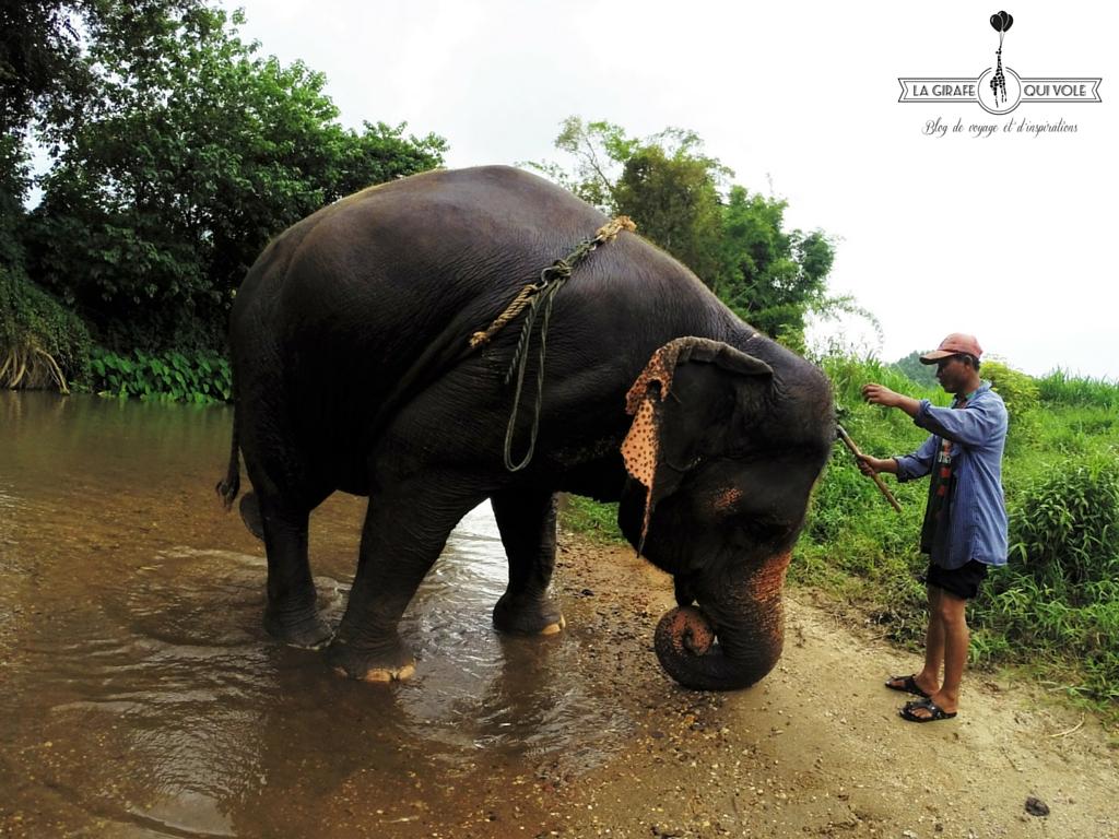 balade éléphant chiang mai thailande