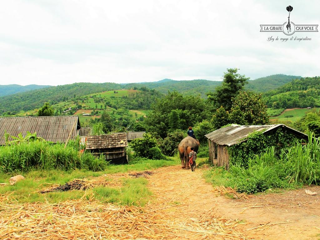 balade-elephants-thailande-chiangmai (2)