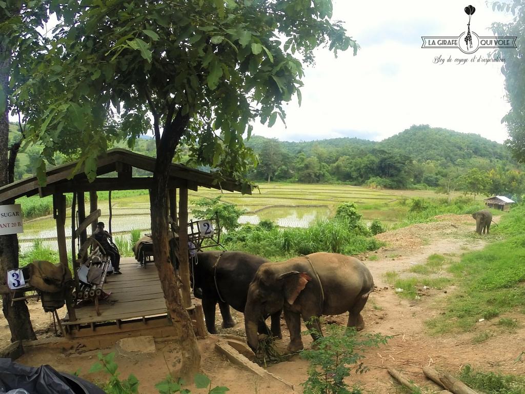 balade éléphant chiang mai