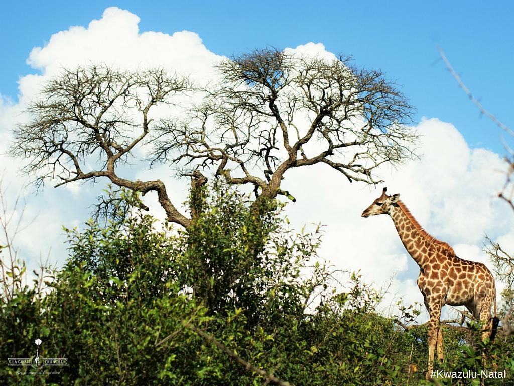kwazulu natal afrique du sud