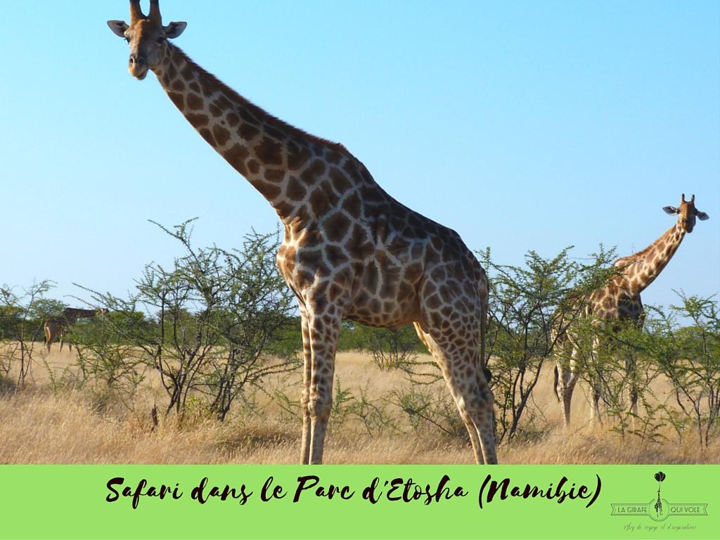 voyage valise safari afrique