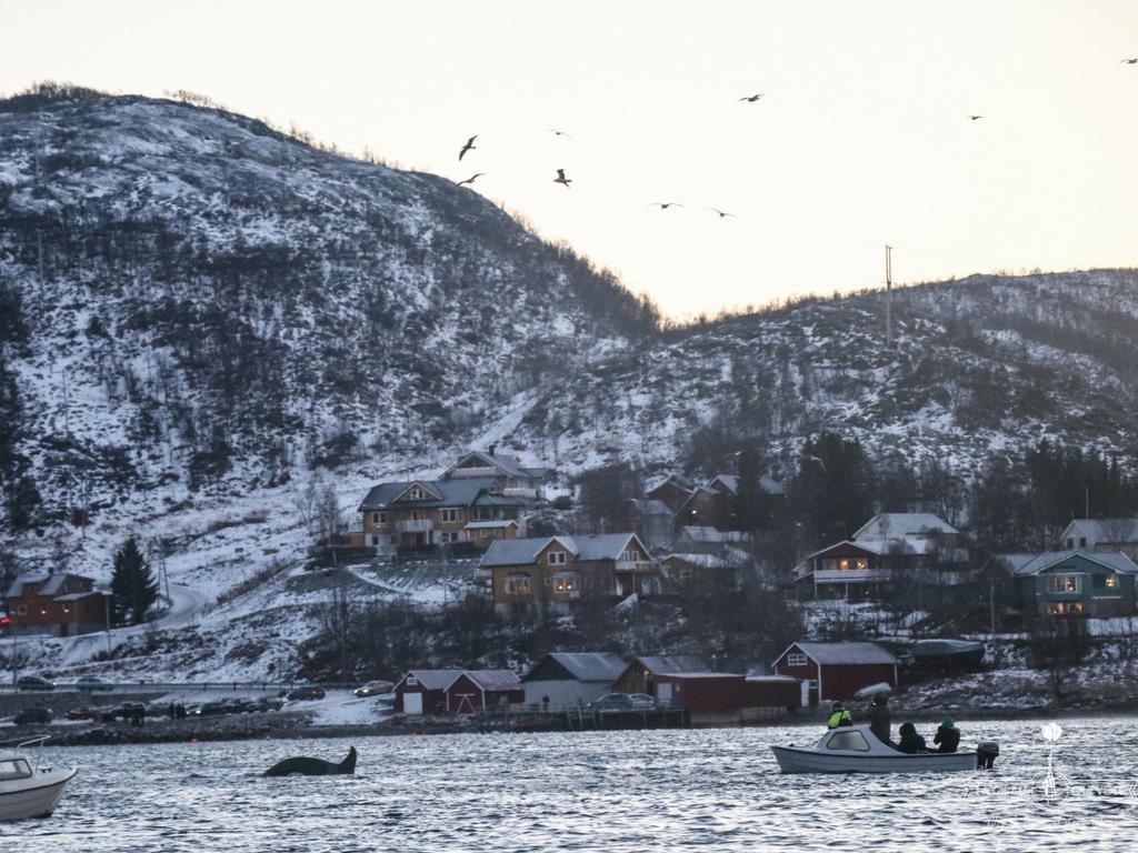 magie tromso norvege orque
