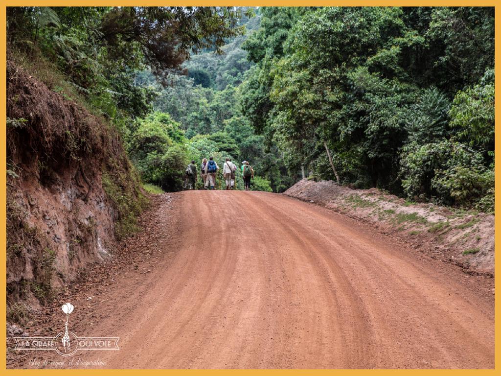 blog la girafe qui vole gorilles ouganda bwindi