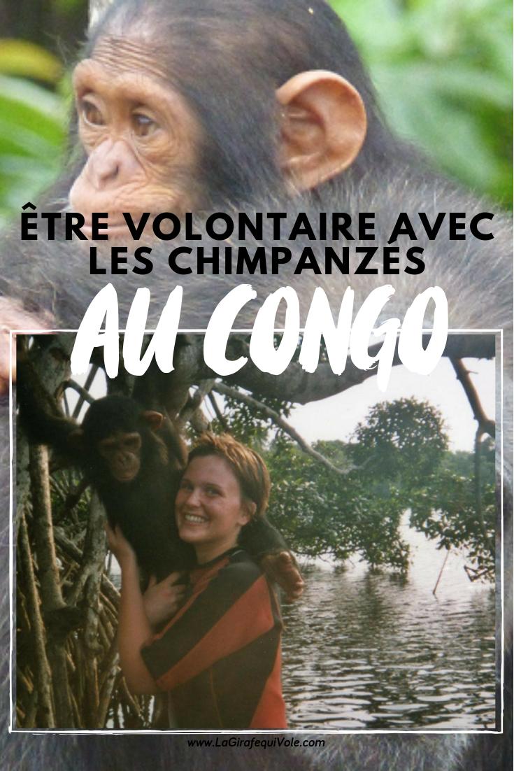 volontaire avec les chimpanzés au Congo