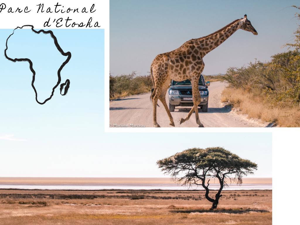 voyage namibie insolite