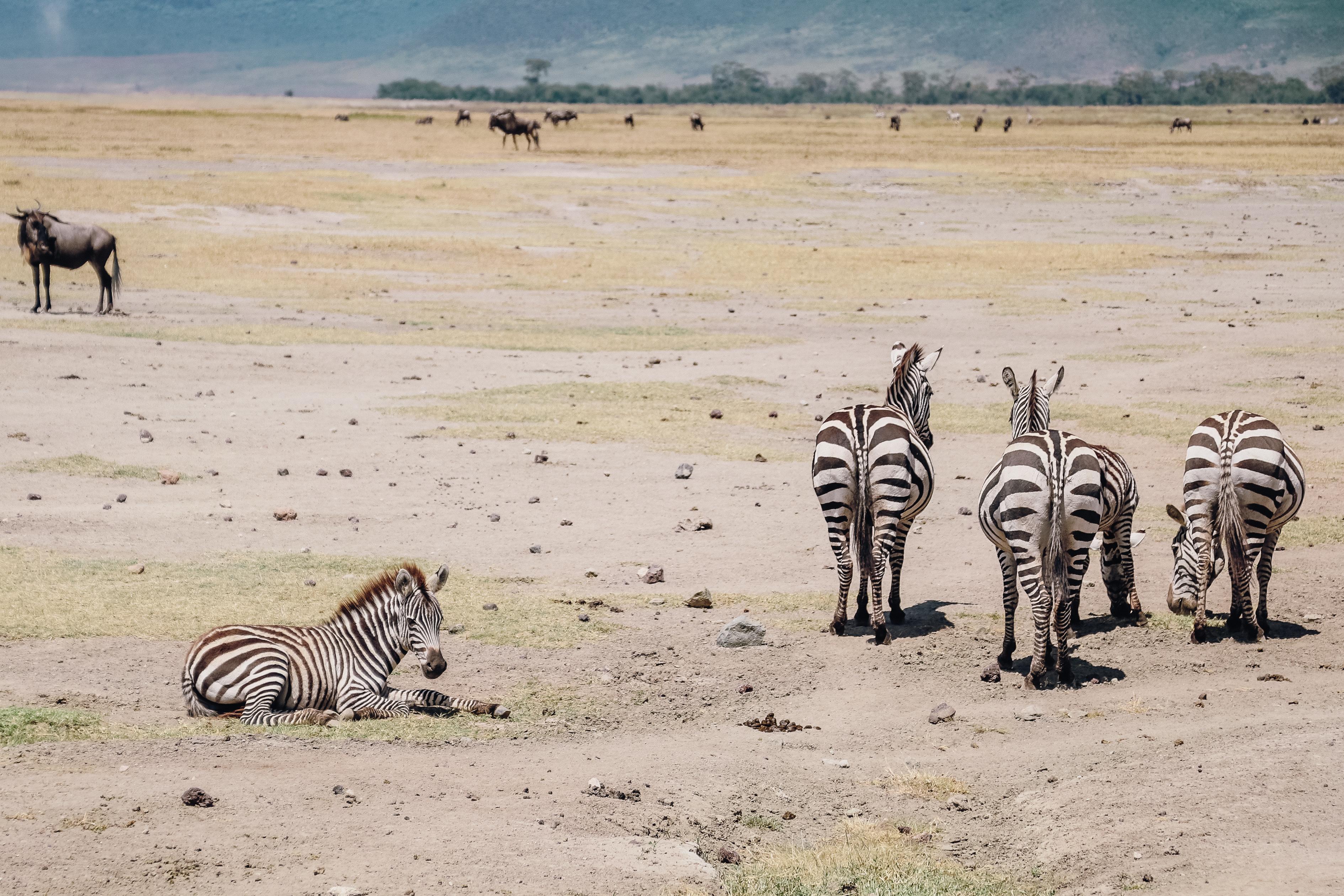 safari Afrique Tanzanie